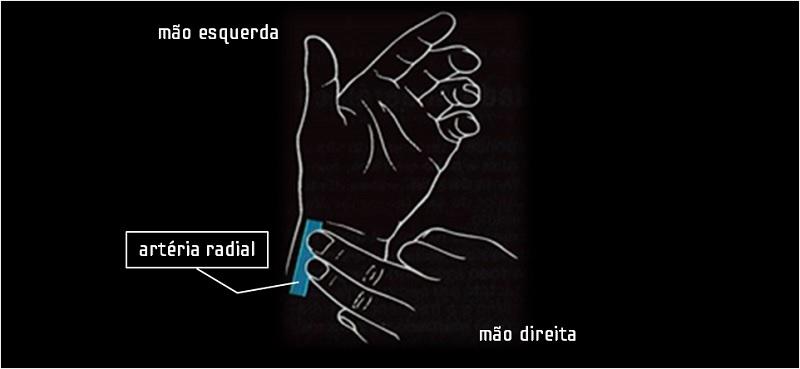 artéria radial